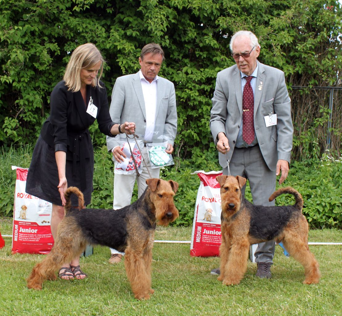 Description: http://terrierklubben.no/Userfiles/Sites/images/airedale/BIS%20til%20web.jpg