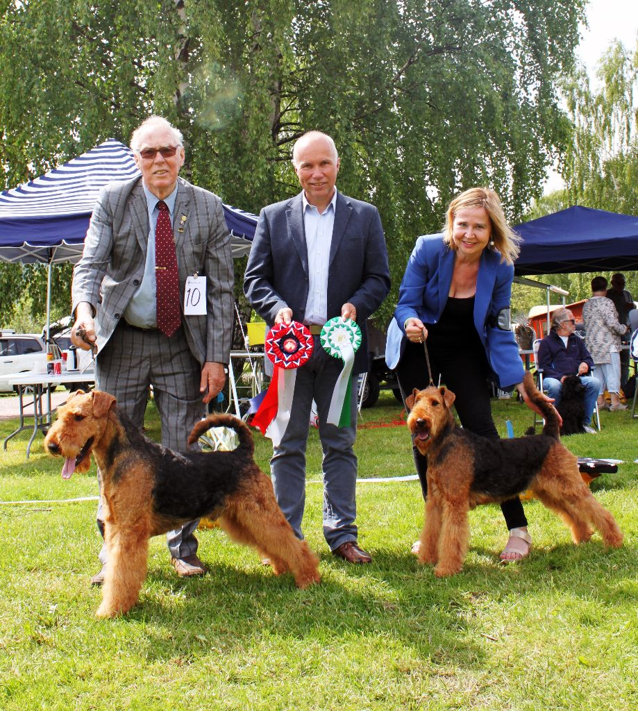 Description: http://terrierklubben.no/Userfiles/Sites/images/airedale/BIS_BIM2.jpg