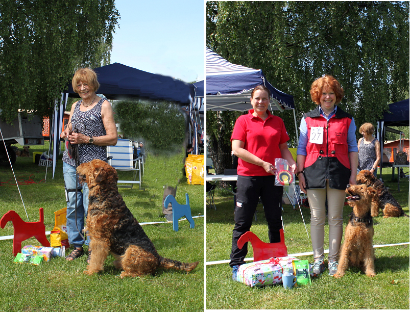 Description: http://terrierklubben.no/Userfiles/Sites/images/airedale/Lydighet2015.jpg