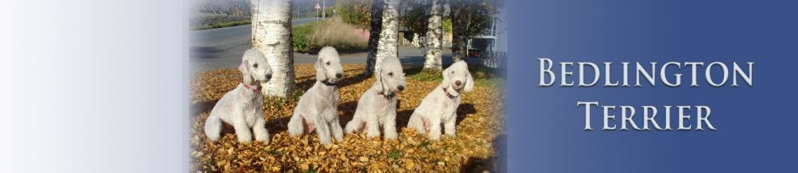 117_bedlington-copy.jpg